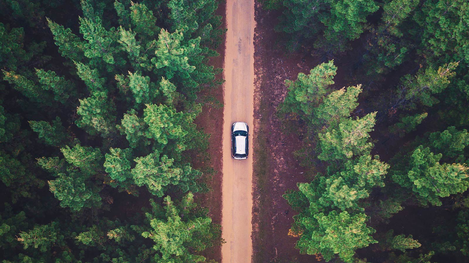 Birds-eye view of car driving down forest road.