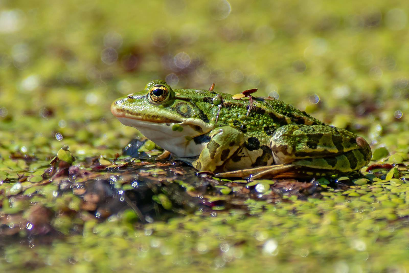 Green frog sitting on green vegetation.