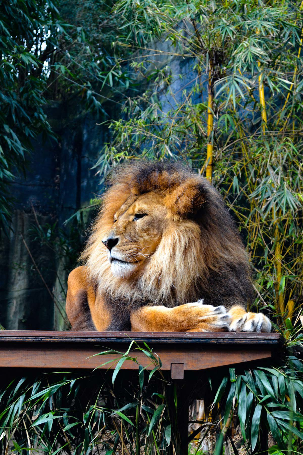 Lion sitting on bench surrounded by tropical trees.